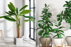arredare con le piante - migliori piante da arredo