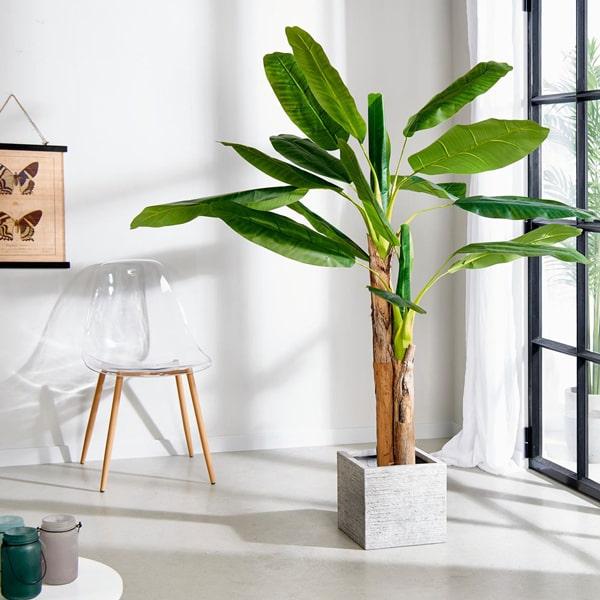 banano arredare con le piante